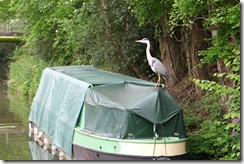 Heron boater