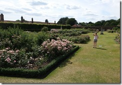 Hampton Court Rose Garden