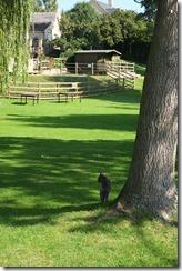 Biggles explores the pub garden