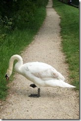 Saul Swan