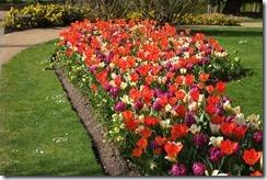 The Savill Garden: Tulip Border