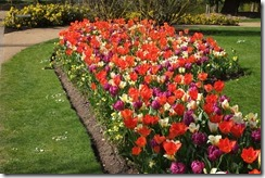 The Savill Garden: Tulip Border