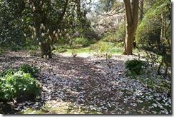 The Savill Garden: Snow Fall?