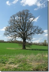 Banbury Oak
